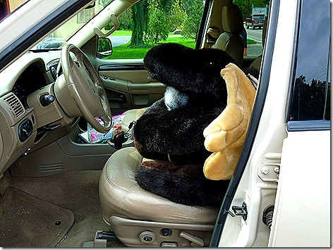New Moose in Car