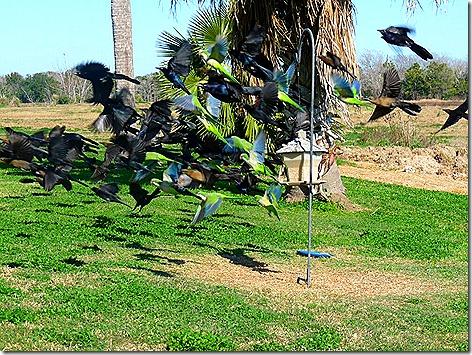 Birdfeeder 4