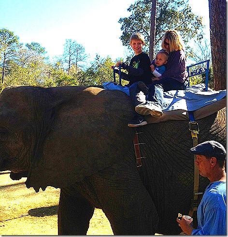 Landon's 1st Elephant