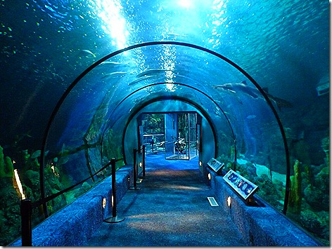 Moody Fish Tunnel