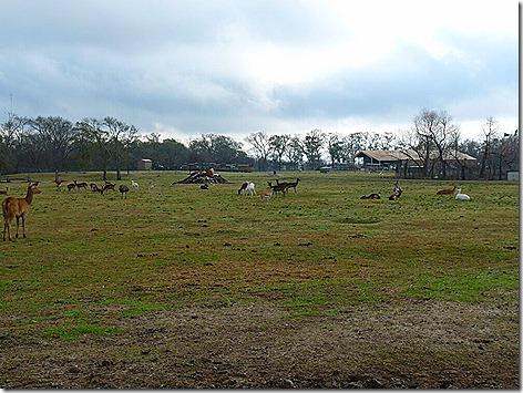 Wildlife Herd