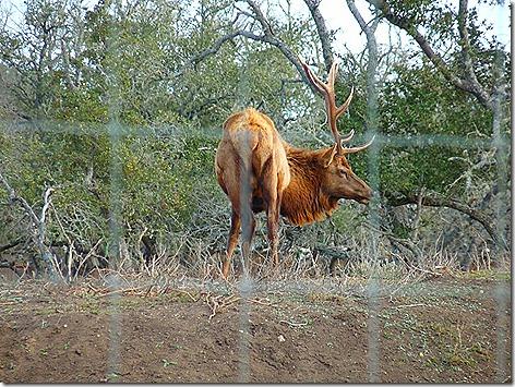 Bump Gate Elk 1
