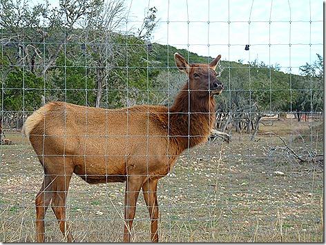 Bump Gate Elk 2