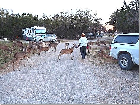 Deer Whisperer 1