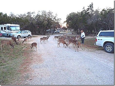 Deer Whisperer 2
