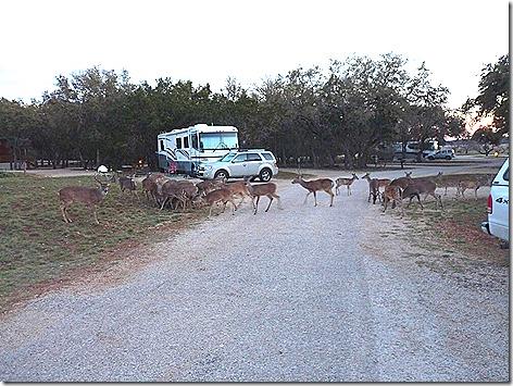 Deer Whisperer 3