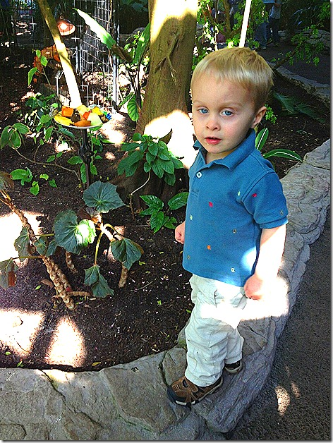 Landon at Butterfly Museum