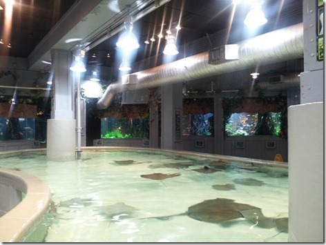 StingRay Reef 2