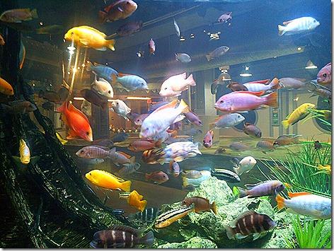 StingRay Reef 5