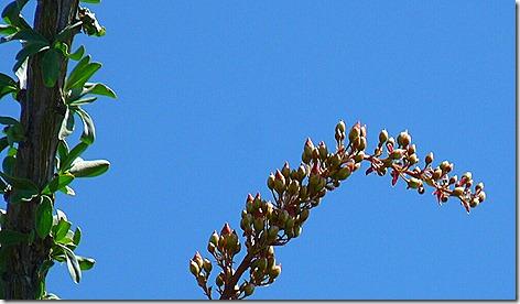 Cactus Blooms 3