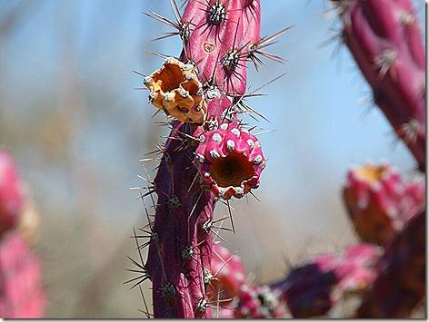 Cactus Blooms 5