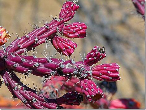 Cactus Blooms 6