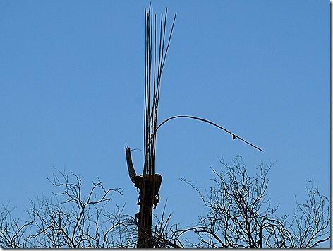 Cactus Bones 2