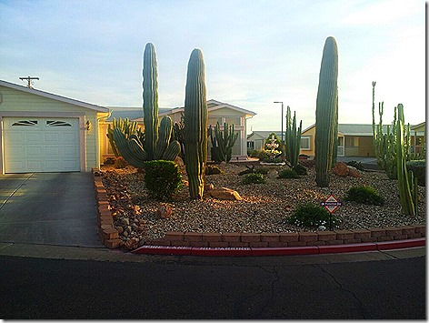 Apache Junction Landscape
