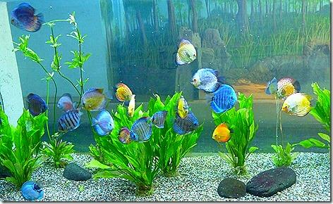 Aquarium WWZ