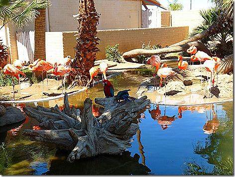 Flamingos WWZ