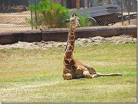 Giraffe Baby WWZ