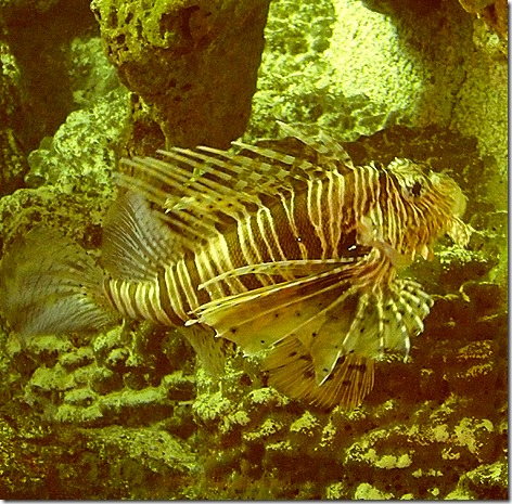 Lionfish WWZ