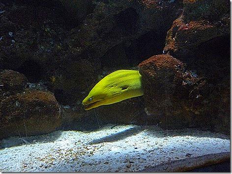 Moray Eels WWZ 2
