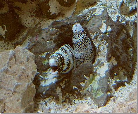 Moray Eels WWZ