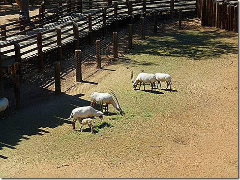 Oryx WWZ