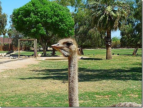 Ostrich WWZ 2