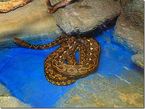 Python WWZ