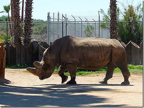 Rhino WWZ