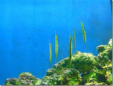 Shrimpfish WWZ