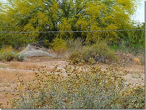 Snakehole Golf 2