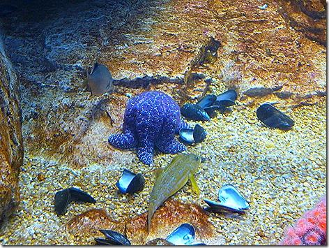 Starfish WWZ 1