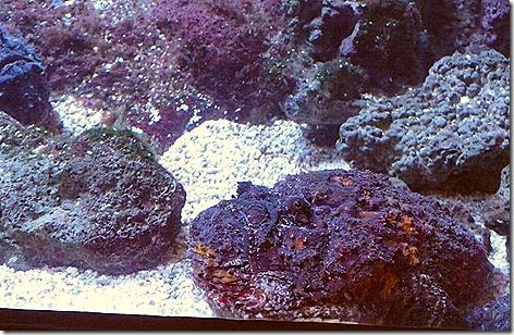Stonefish WWZ 2