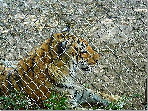 Tiger World Wildlife Zoo