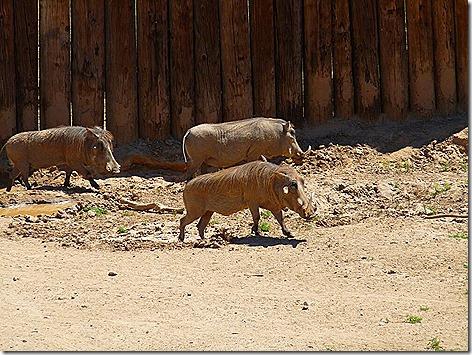 Warthogs WWZ