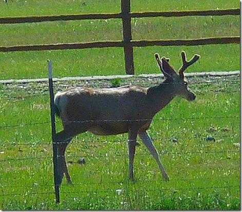 Yellowstone RV Park Horny Visitor