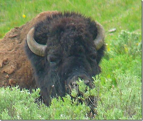 Yellowstone Trip 15