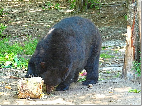 Bear Ranch 1