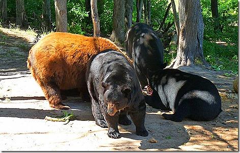 Bear Ranch 2