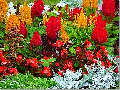 Mackinac Island Flowers