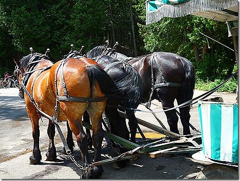 Mackinac Island Horse 2