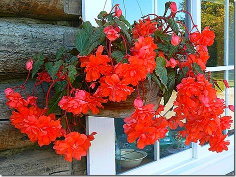 AK Flowers 1