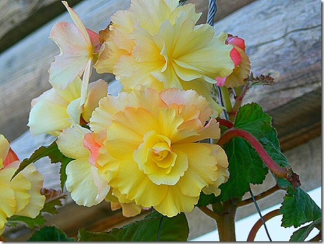 AK Flowers 2