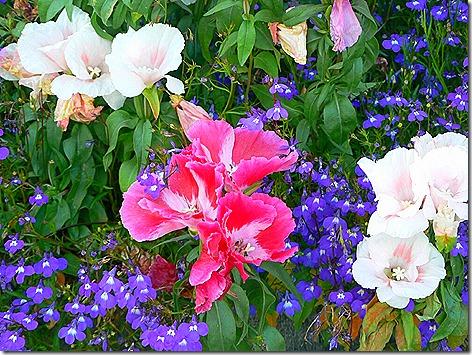 AK Flowers 3
