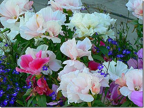 AK Flowers 4