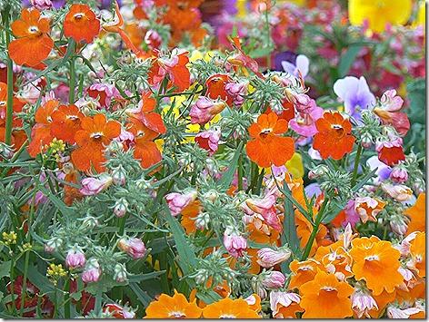 AK Flowers 6