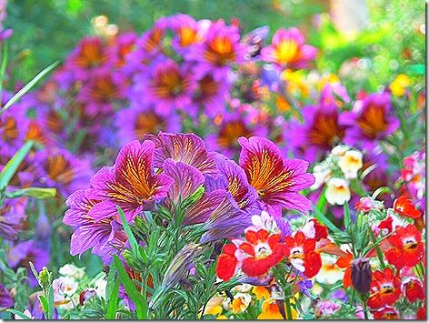 AK Flowers 7