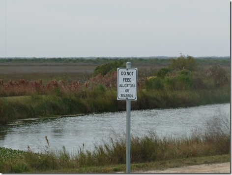 Do Not Feed Alligators or Seabirds