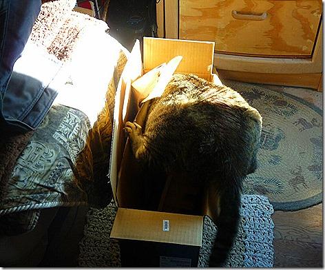 Mister's New Box