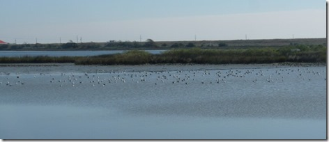 Seagulls on the Mudflats 1