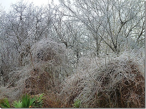 Thousand Trails Ice Storm